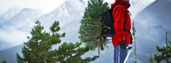 "Google: ""national forest christmas tree"""