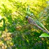 DragonFly 8 | 123 Fotogяaphy