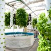 The Farm of the Future: Green Sky Growers