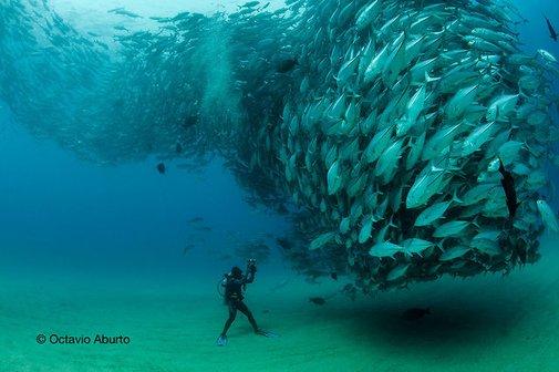 Fish Tornado!!!!  Mind = BLOWN!
