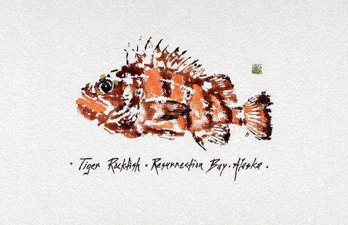 iva cooney - Work Zoom: Tiger Rockfish, Resurrection Bay, Alaska (Giclee: Fine-Art Print)