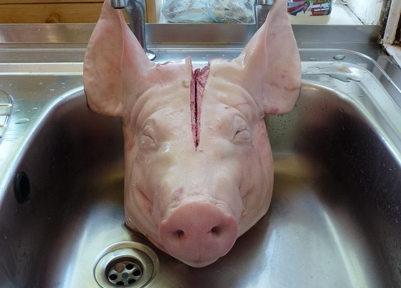 Pig head dog food recipe
