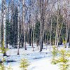Russian Forest | 123 Fotogяaphy