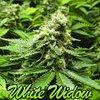 White Widow Feminized Seeds