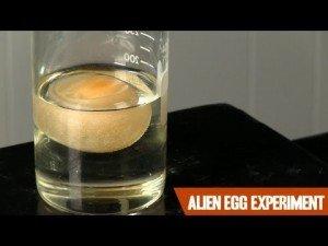 The Alien Egg Experiment