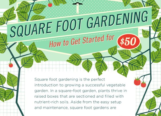 How to start your own square foot garden