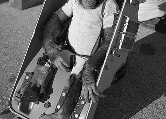 Arrivederci to the first hominid in space