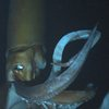 How Scientists Captured the First-Ever Video of a Giant Squid | Mental Floss