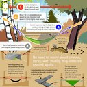 Hammock Camping Basics illustration