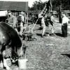 Sgt Reckless - Korean War Horse Hero - YouTube