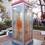 Urban fish in Japan