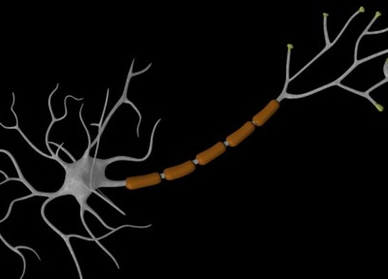 Brain cells created from human skin cells offer potential MS treatment