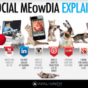 Social Media Explained by cute cats | from Avalaunch Media