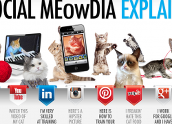 Social Media Explained by cute cats | from Avalaunch Media