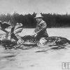 TR riding a moose