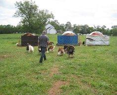 Keeping a Heritage Turkey Flock - Farm Dreams