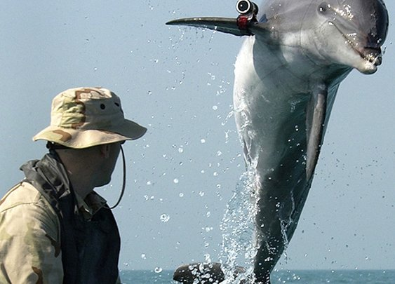 Trained Soviet Attack Dolphins With Head-Mounted Guns Are On The Loose