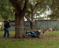 Deer Roping 101 (Lessons Learned)
