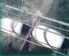 BBC News - Close shave for shark divers in South Africa