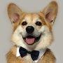 Navy Blue Pet Bow Tie Collar