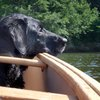 How to Take Your Dog on a Canoe Trip | The Art of Manliness