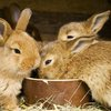The Guide to Raising and Breeding Rabbits for Meat - Sustainable Farming - MOTHER EARTH NEWS