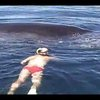 Humpback Whale Shows Appreciation After Being Freed From Nets | ClickExist