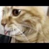 Just a Cat Playing with a Vacuum Cleaner