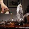 BrewDog Unveils the World's Strongest, Squirreliest Beer Ever