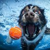 Deep Diving Dawgs - Underwater Pics
