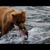 Alaska - Uncharted Waters