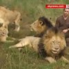 South African 'Lion King' Is Like One Of The Pride - YouTube