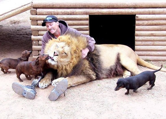Man and Lion's bestfriends