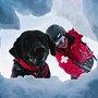 Avalanche Rescue Dogs // gearpatrol.com