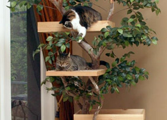 Lifelike Mature Large Cat Tree Houses