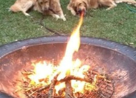 OMG Run For Your Lives: Dragon Dog Will Burn You to a Crisp [Pic]   Geeks are Sexy Technology News