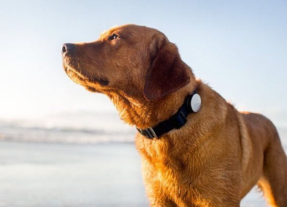 Whistle - Exercise and Activity Tracker For Your Dog