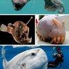 Scary Seas: 21 Terrifying Deep Ocean Creatures