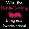 Why the mantis shrimp is my new favorite animal - The Oatmeal