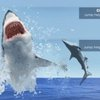 Infographic: Flying Sharks – The Highest Leaping Sharks