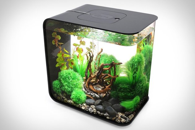 BIORB Flow Aquarium | That Should Be Mine