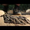 Genius Caterpillar Speed Trick – Smarter Every Day