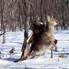 Golden eagle attacking deer in Russia wilderness caught on camera | Metro News
