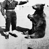 The Bear who Fought in World War II