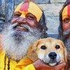 Slumdog mountaineer:  Abandoned puppy climbs Everest