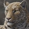 BBC News - Oldest big cat fossil found in Tibet