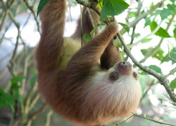 Sloths Take Over Pop Culture