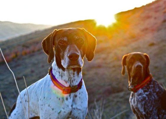 ACL Endorses | Skookum Dog