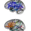 The hardwired difference between male and female brains