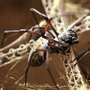 Body Armor Made From Spider Silk